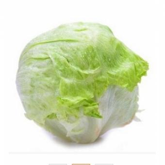 【菜无忌】 有机结球生菜 西生菜、圆生菜 约500g/包