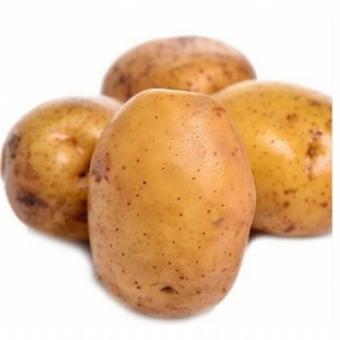 【菜无忌】 有机土豆洋芋 马铃薯 约400~500g/份