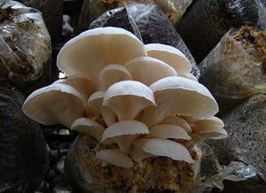 鲜菌礼盒组合A1款 小汤山新鲜蘑菇礼盒