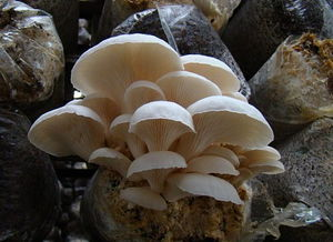 鲜菌礼盒组合A2款 小汤山新鲜蘑菇礼盒