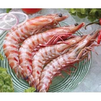 野生斑节虾8头 海鲜大礼包 绝对正宗超值 欢迎团购