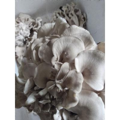 新鲜栗蘑-蘑菇采摘基地,栗蘑500g一份