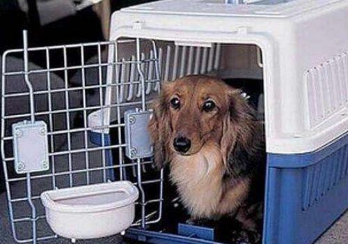 成都寵物托運,寵物航空運輸,寵物空運公司