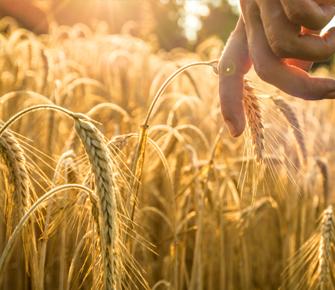 中食农业LOGO标识及应用设计