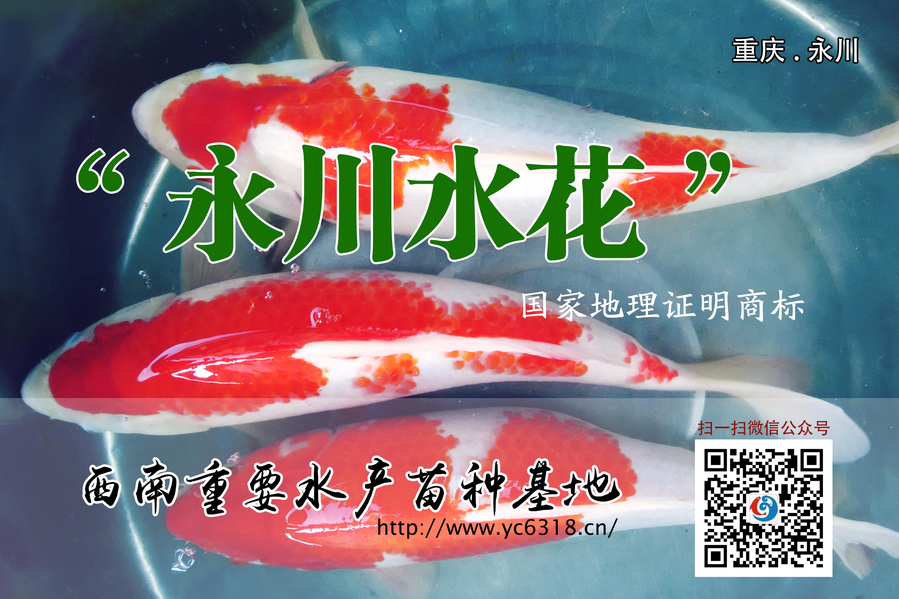 永川水花渔业会社欢迎您的光临!